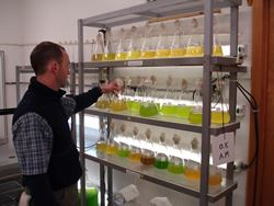 Barley Dunne, Swirling Our Many Algae Strains - Th