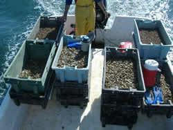 Shellfish Are Ready to Be Released Into the Wild