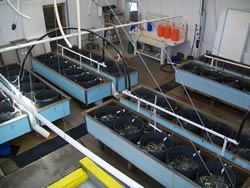 The Outback Downwelling System of the Hatchery