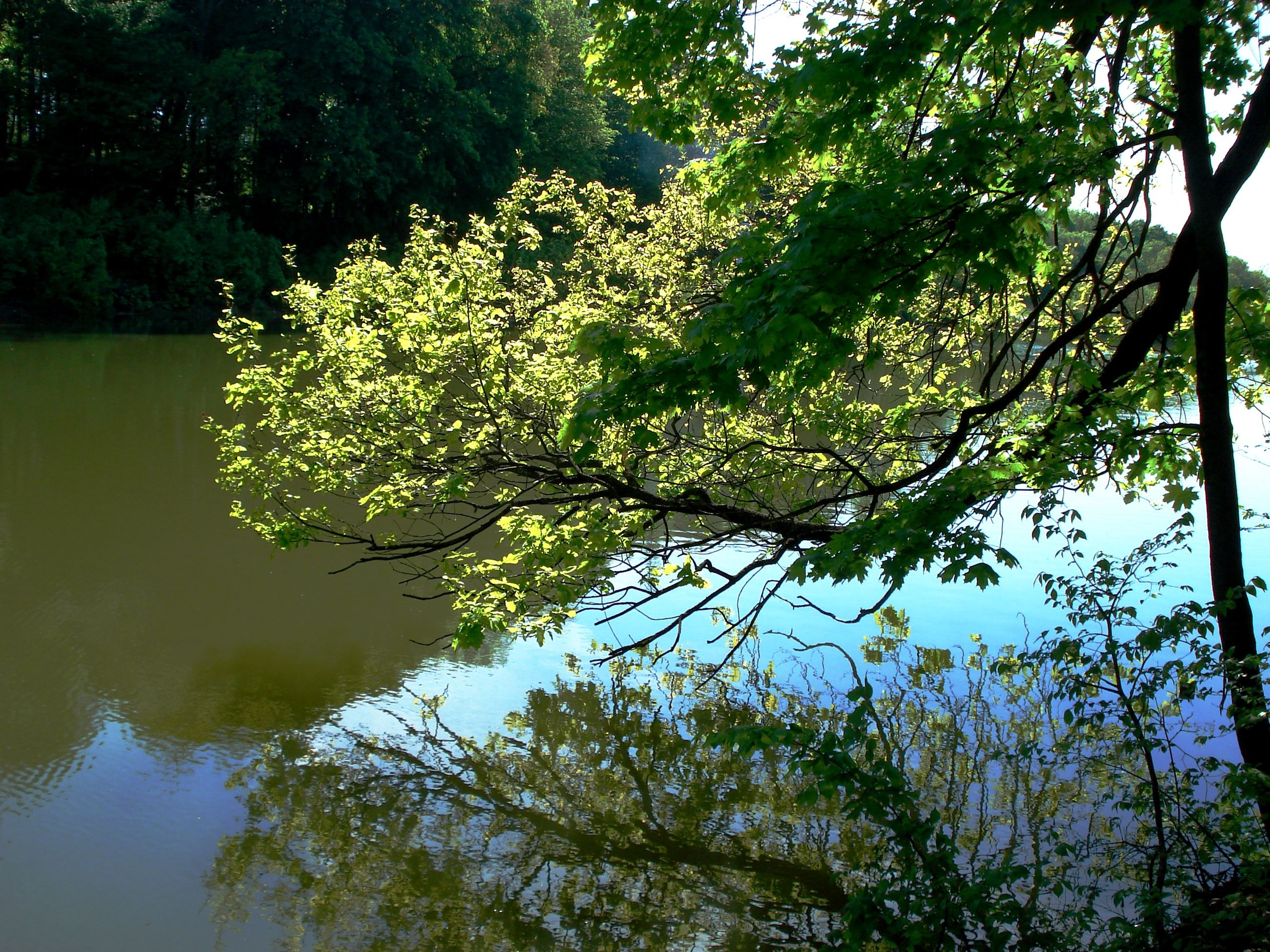 forest_pond_tree_water photo