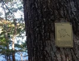 Tree Identification Marker