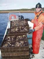 Hatchery Staff Member Barley Dunne with Trays of Juvenile Scallops